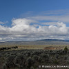 A view across the high desert from the Crooked River Highway to Pine Mountain.