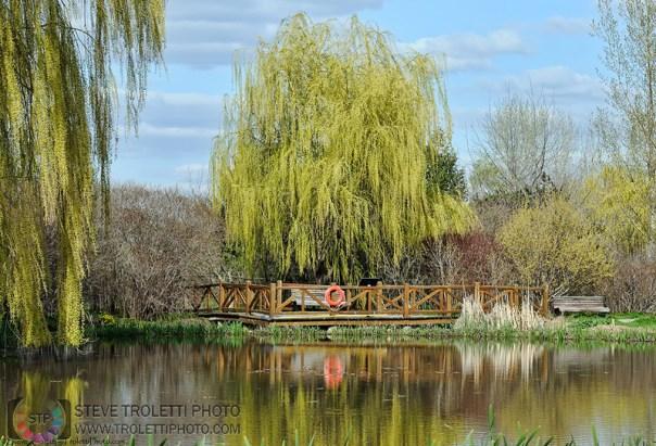 L'étang de la Maison de L'Arbre by Steve Troletti