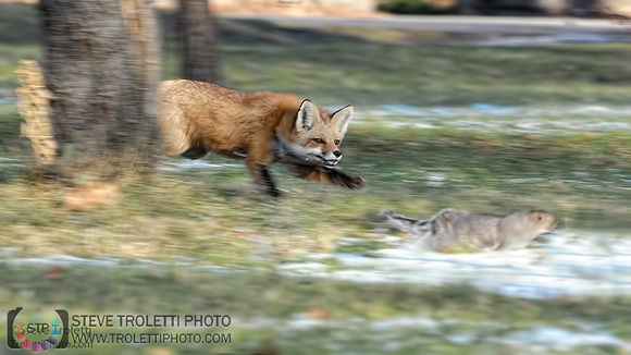 Steve Troletti Photography: PICTURE OF THE DAY / PHOTO DU JOUR &emdash; The Hunt! / La Chasse!