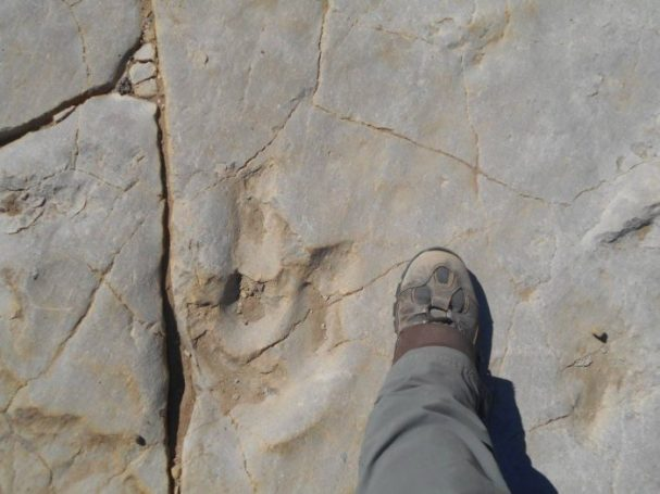 great plains trail colorado dinosaur tracks
