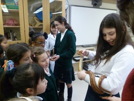 Gr.2's at Sr. Science Wing - Snakes