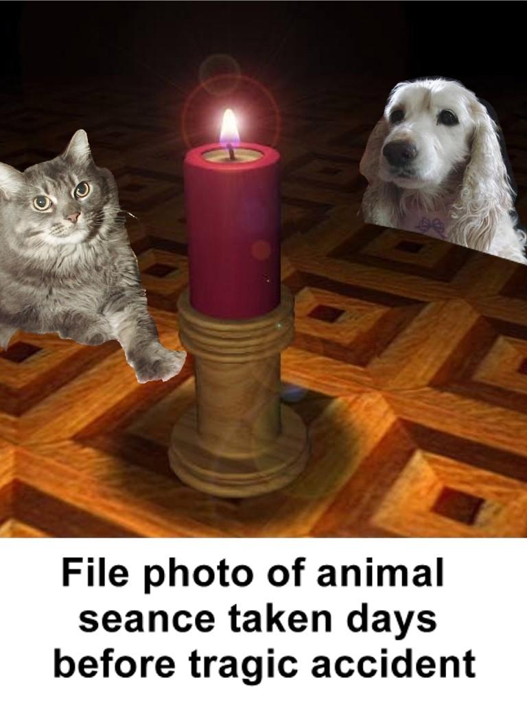 Fire Saves Dog Kitten