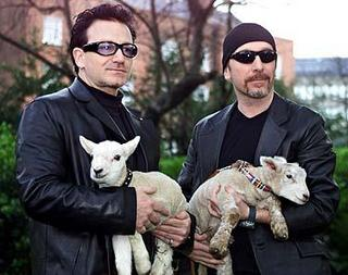 Bono and The Edge with sheeps