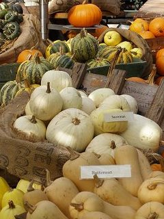 Lots of different squashes