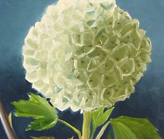 73 Annabelle Flower