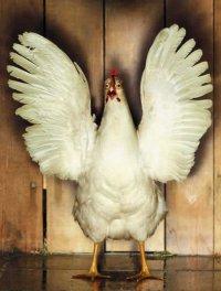 Caldo de alma para el pollo