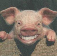 https://i2.wp.com/photos1.blogger.com/blogger/5408/2292/320/Pig_Allah.jpg