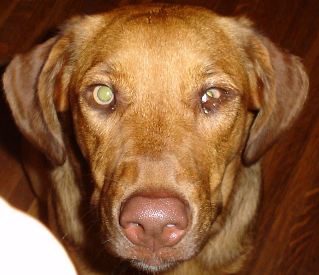 Eye One Dog Dilated