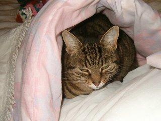 Lady V under the duvet
