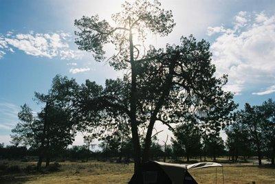 Sunshine through a tree