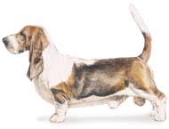 basset Os dez cachorros mais inteligentes e os mais burros