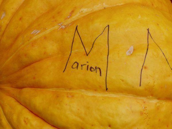 Close up of a huge pumpkin
