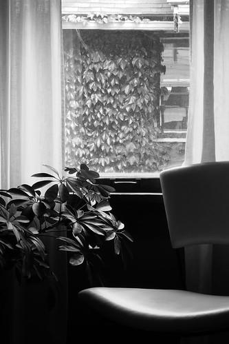 Window 4388