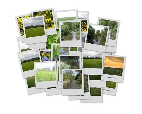 Collage de todas las fotos campestres tomadas hoy