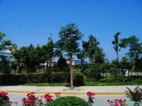 吴江之花园式工厂