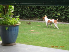Snoopy Chase Squirrel