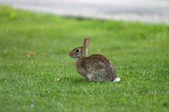 Lens Test - Bunny 1