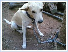 Cute dog at Suman & Chitra's