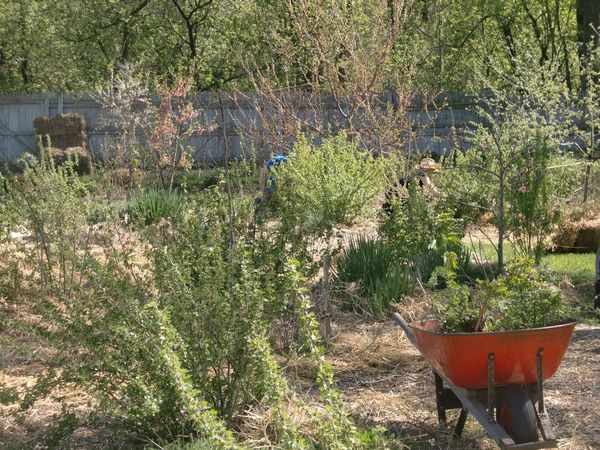 Tending the sacred garden!