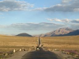 Road to Leh1