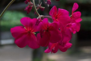 fine fleur