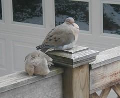 cold_birds