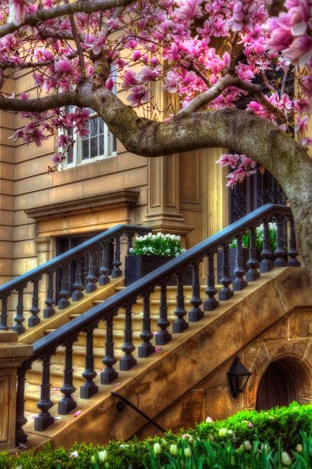 springtime-in-boston-joann-vitali