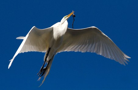 Egret-and-Stick_002