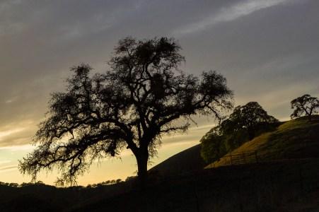 Classic California Ranch