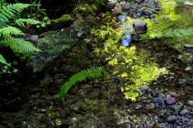Liquid Spring
