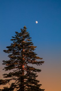 treetop-and-setting-moon