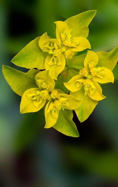 Spring-Lake-Wildflower