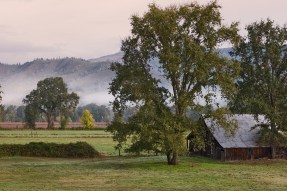 Barn and Fog, Potter Valley
