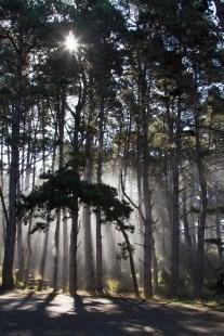 Salt Point State Park Fog