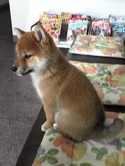 Shikata Animal clinic