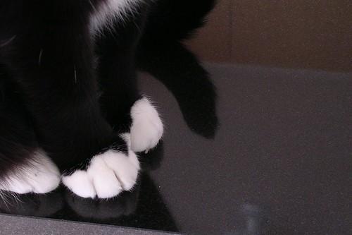 Galumphing Cat Feet