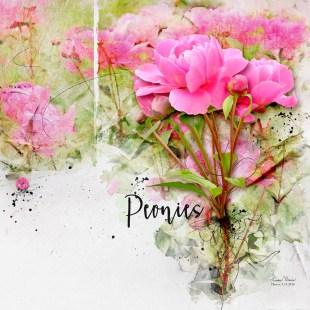 Now_2016-07-23_Peonies_lkdavis_1000