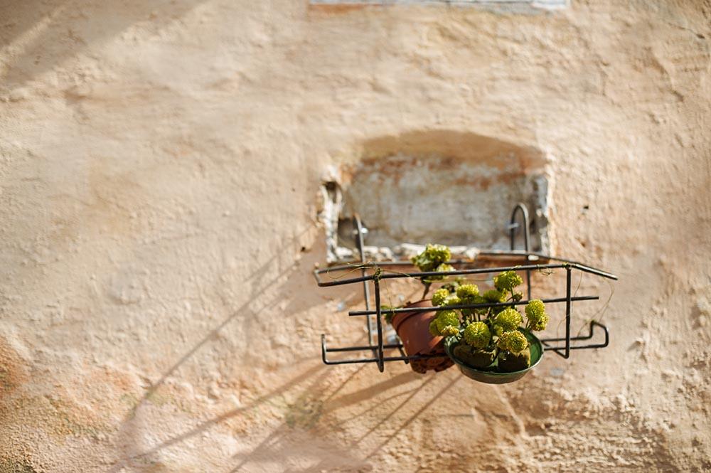 rome, roma, italy, flowers