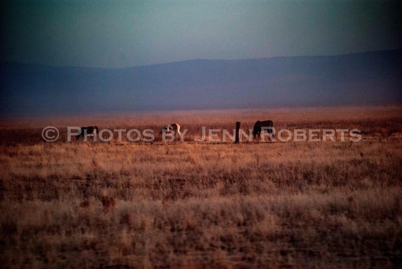 Arizona Sunrise - Image 9