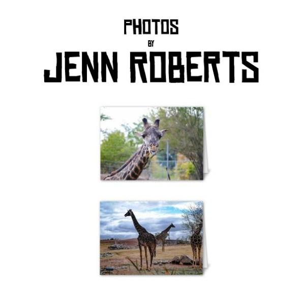 Giraffe Blank Card Pack