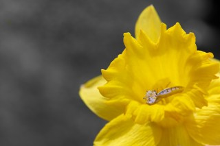 Ring in a Tul