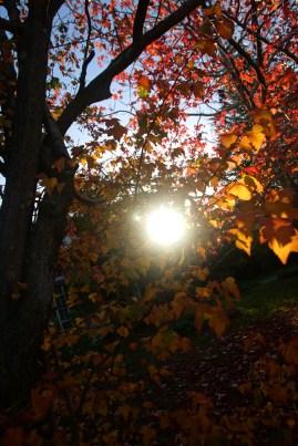 Autumn23