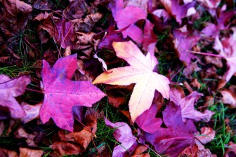 Autumn29