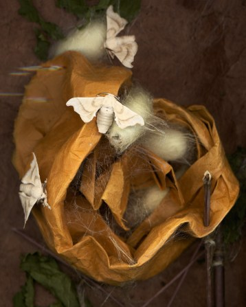Silk Moths on Paper · 2012 · 16 x 20 in.