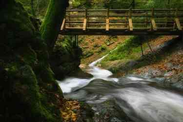 Under the forest bridge