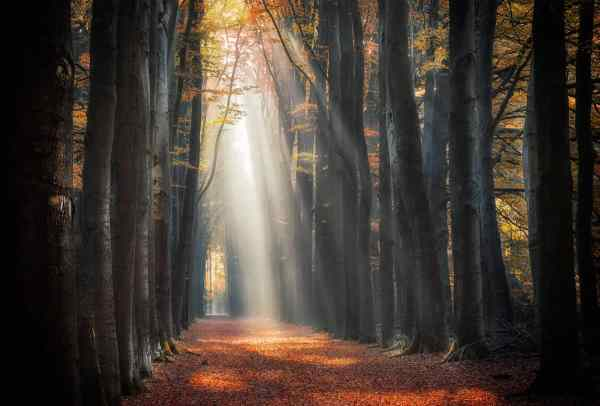 autumn path with intense light rays