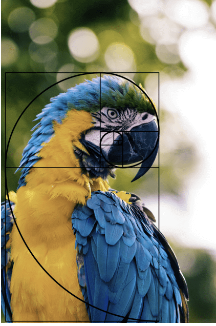 30-composition-Fibonacci-Spirals