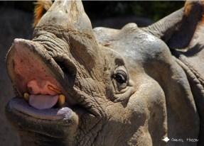 RhinoLips