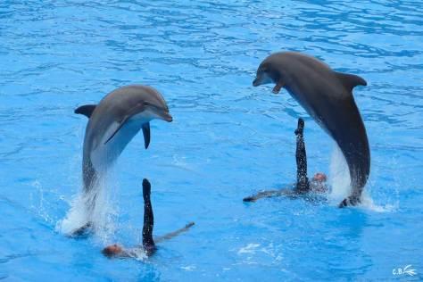Spectacle avec des dauphins, Marineland, 2010
