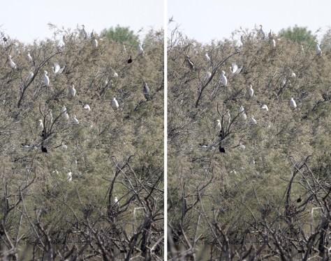 Jeu des 7 différences : arbre aux oiseaux en Camargue